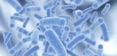 Пробиотиците и тяхното действие