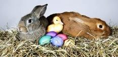Весел Великден от СИЛА БГ
