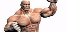 Мускулни фибри - видове и трениране