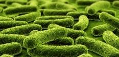 Пробиотици - Живи хранителни добавки