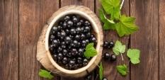 Касис – черното злато на плодовете